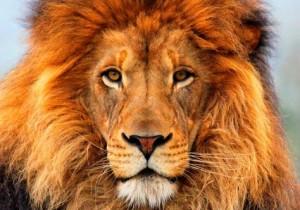 A parte do leão (Zero Hora)